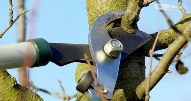 Medžius genėti gali ne kiekvienas, nuotrauka-1