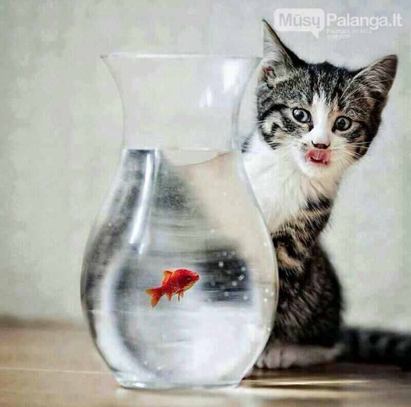 Patikrinti katės sveikatą jau galime ir be streso gyvūnui, nuotrauka-1