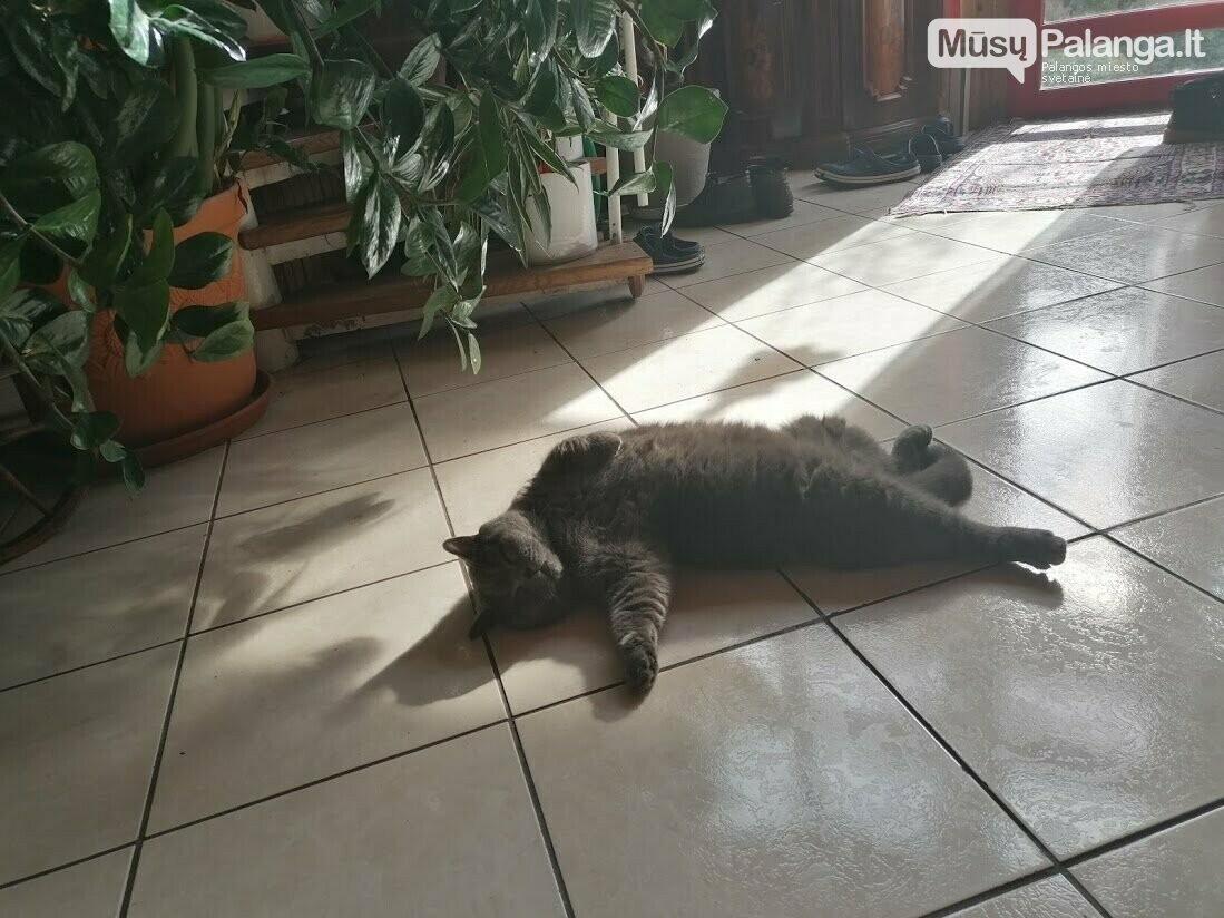 Dingo aktyvaus palangiškio Justino Masalskio katinas (atnaujinta), nuotrauka-4