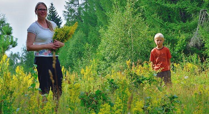 Kai sklinda žolelių aromatas: žolininkų Giedrės ir Lino Bružų patarimai , nuotrauka-1