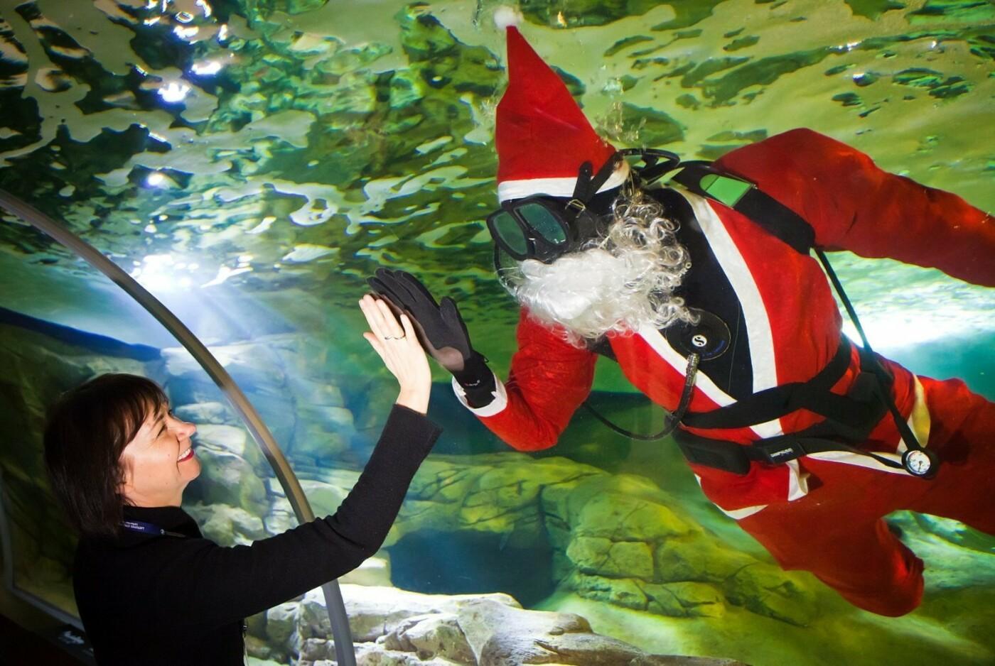 Klaipėdoje akvariume nardo Kalėdų senelis (nuotraukų galerija), nuotrauka-5