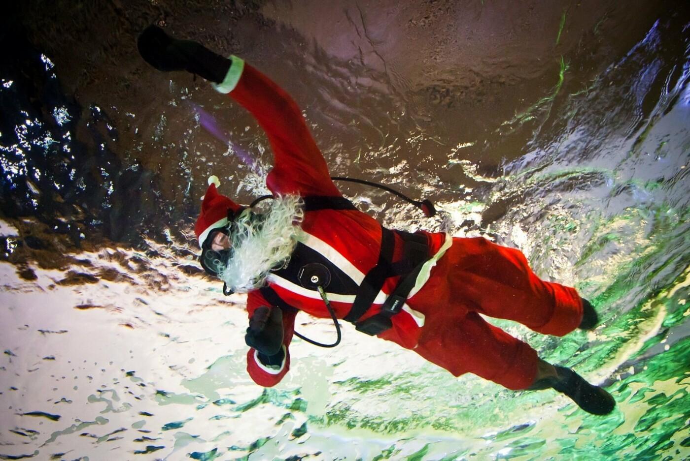 Klaipėdoje akvariume nardo Kalėdų senelis (nuotraukų galerija), nuotrauka-6