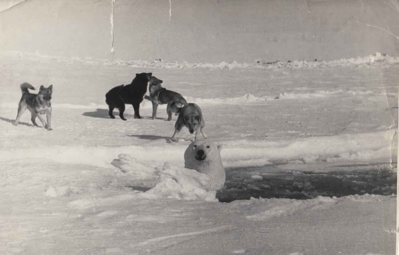 Užfiksuotas momentas, kai atklydęs baltasis lokys įkrito į aisbergo eketę.
